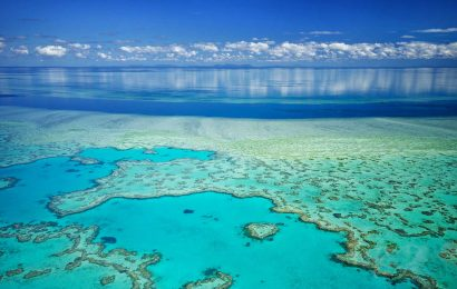 great-barrier-reef-artis
